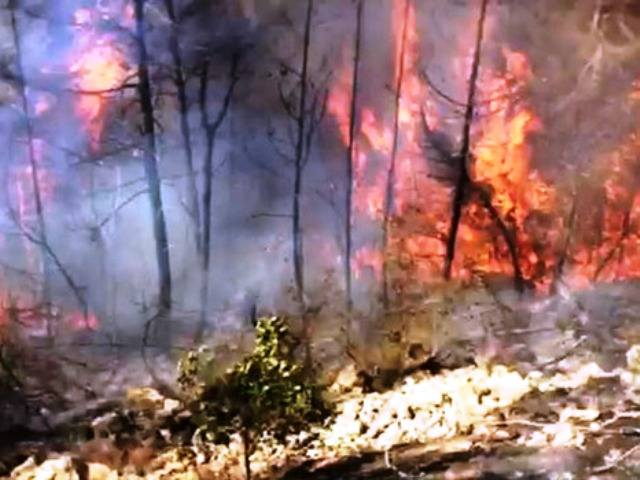 שריפה ביער (צילום: כבאות והצלה ירושלים)
